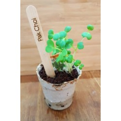 Little Garden Plant Markers (Pack of 24)